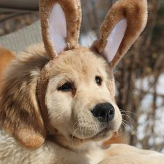 11  Adorable Dogs Who Had An Awesome Easter