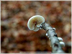 Enchanted Wood, Foggy Forest, Mushroom Fungi, A3, Stuffed Mushrooms, Weird, Hands, Landscape, Eyes