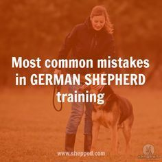 6 common training mistakes that most German Shepherd owners make https://www.shepped.com/most-common-training-mistakes/ #germanshepherd #gsdtraining