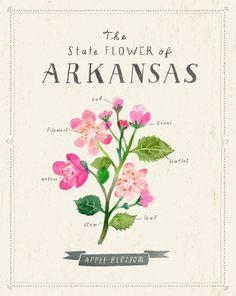Arkansas State Flower Print The Apple Blossom by Sarah Walsh/Tigersheepfriends Vintage Blume Tattoo, Vintage Flower Tattoo, Vintage Flowers, Vintage Floral, Lincoln, Arkansas Tattoo, Apple Blossom Tattoos, Apple Festival, Art Journal Techniques