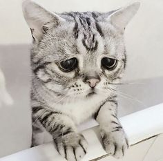 The world's most unhappy and sad cat Luhu - Katzen Cute Cats And Kittens, I Love Cats, Cool Cats, Kittens Cutest, Ragdoll Kittens, Funny Kittens, Baby Animals, Funny Animals, Cute Animals