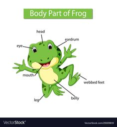 Diagram showing body part frog Royalty Free Vector Image