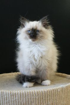 So fluffy :)  I miss Carlos :( @Beth Ryan