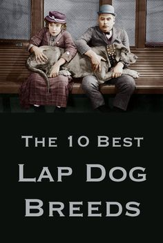 Did your dog make the list? http://theilovedogssite.com/the-10-best-lap-dog-breeds/