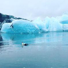 Islandia dzień trzeci, czyli Selfoss-Hofn :)