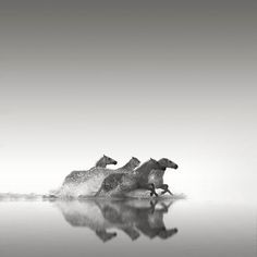 Four horses, Camargue. Photography by Jonathan Chritchley