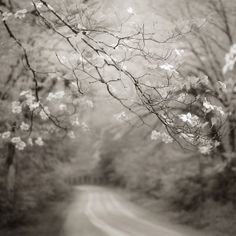 fotografía en blanco y negro árboles niebla por NicholasBellPhoto