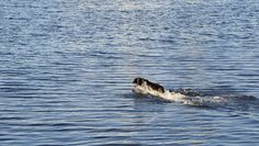 Water Dogs ~ the JetSki Dog