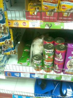 Free Cat with catfood? Sounds like a good deal.