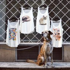 Original, limited edition designer tanktops with funny, thought-provoking sings or ideas and prints of animals and many more. Vintage Fashion, Inspired, Tank Tops, Friends, Cats, Animals, Inspiration, Collection, Design