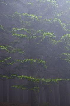 Italy, foggy forest | by Vittorio Ricci