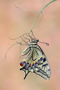 Butterfly by Jim Hoffman......Is it possible to have this done in a tattoo with a 3D look to make it seem real.