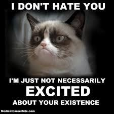 Image result for grumpy cat meme excited
