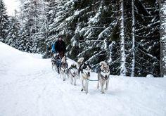 Husky Incentive Vorarlberg (c) Husky Toni Team Building, Dogs, Animals, Outdoor, Sled, Pet Dogs, Nature, Outdoors, Animales