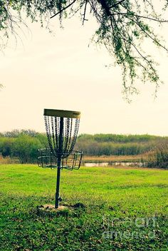 Frisbee golf in the park!