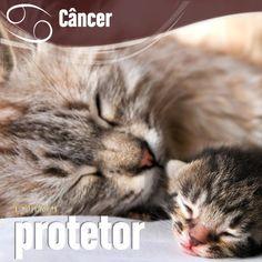"""""""#Câncer #signos #zodíaco ♋"""""""