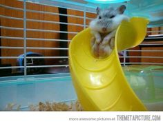 Go down the slide, they said. It'll be fun, they said.