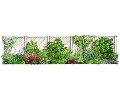A series of planting elevations for the 'Garden on a Roll' Website designed by Antony Henn