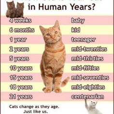 Cats in Human Years