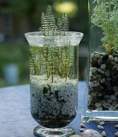 f r den miniteich sch nen pflanzenk bel aus keramik aussuchen balkon pinterest miniteich. Black Bedroom Furniture Sets. Home Design Ideas