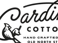 Cardinal Cotton by Matthew Cook