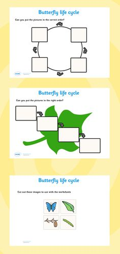 Teach children with the life cycle of a butterfly printable resource. Choose which life cycle format they prefer and cut the pictures out and put them in order. Teaching Skills, Teaching Aids, Teaching Resources, Eyfs Activities, Butterfly Life Cycle, National Curriculum, Preschool Lessons, Classroom Displays, Life Cycles