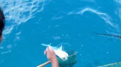 Câu cá Đốm ở biển Côn Đảo