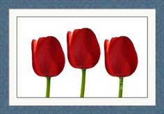 """$275   30.00"""" x 18.75 framed and matted print called """"Red Tulips."""" Art Prints For Sale, Fine Art Prints, Framed Prints, Red Tulips, Delaware, Great Artists, Art Work, Ohio, Tapestry"""
