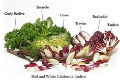 Visit California Endive, the largest commercial grower of Belgian Endive in the U.S. Discover why endive is so popular in Europe with these simple recipes.