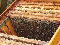Bienenzucht und Bienenhaltung für Selbstversorger