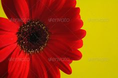 Red flower detail - PhotoDune Item for Sale from $1.00