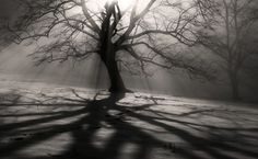 Light And Shadow, photography by Egon Kronschnabel Light And Shadow Photography, Tree Photography, Black And White Photography, Amazing Photography, Portrait Photography, Chiaroscuro, Photoshop, Pretty Pictures, Designer