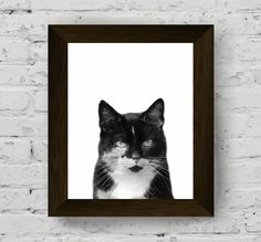 Animal print nursery, cat print, baby room prints, animal wall art, nursery…