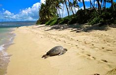 Photo tour: The Hawaiian Islands