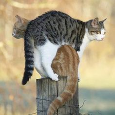We Like This Post - Bottled by Cute Cats & Kittens I Love Cats, Crazy Cats, Cool Cats, Funny Cats, Funny Animals, Cute Animals, Weird Pictures, Animal Pictures, Beautiful Cats