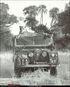 A Series 1 landy belonging to Adamsons, & the famous Elsa sitting on top of it.  Late 1950's (the book Born Free was released in 1960).