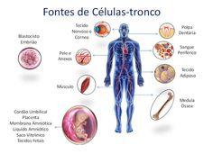 INFORMATIVO GERAL: Treinamento sobre Células-Tronco na UNIMED Vale do...