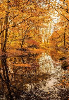 7 Bittner Creek in fall (Guilford, Connecticut) by Alan Shulik  / 500px