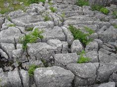 http://www.yorkshire-dales.com/limestone-pavements.html