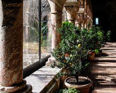 The Met Cloisters The Cloisters, Art Museum, Medieval, Explore, Architecture, Plants, Arquitetura, Exploring, Plant