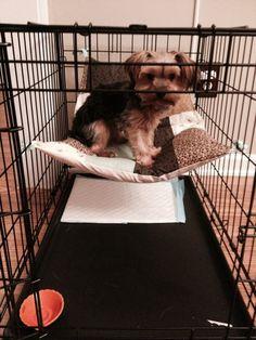 Small Dog Kennel Hammock. by Rainshellynog on Etsy, $30.00