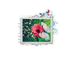 butterfly spring, created by believerofhope on Polyvore
