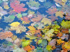 Herbstspaziergang by uwebwerner.de, via Flickr