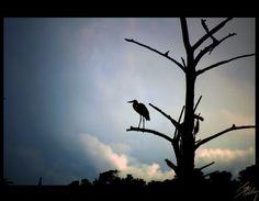 The bird - Pho·to·gra·phy