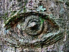Trees have Eyes too.The All -seeing eye Tree Carving, All Seeing Eye, Green Man, Gravity Falls, Magick, Mother Nature, Bonsai, Old Things, Sculptures