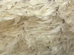 Plume Feather Couture Bridal Lace Fabric Ivory | Fabric | Bridal Fabrics | Minerva Crafts