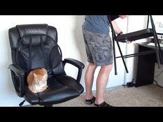 il gatto non vi permette di lavorare? ecco la soluzione!  #animals