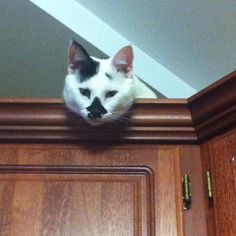 Murdock on top of the kitchen cabinets.