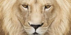 PETITION...PLEASE SIGN N SHARE...TY..Stop Lion Trophy Hunting