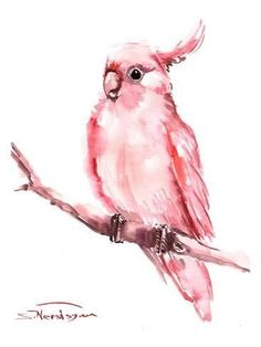 Pink Cockatoo Original watercolor painting 12 X 9 in pink pets birds bird lover art Watercolor Bird, Watercolor Animals, Watercolor Paintings, Watercolours, Oil Paintings, Abstract Canvas, Oil Painting On Canvas, Painting Abstract, Painting Art